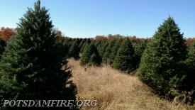 Pictures of trees from the farm we will be getting them from!